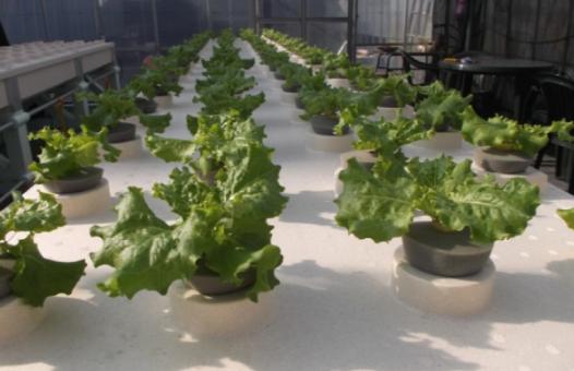 vegetables-plants3